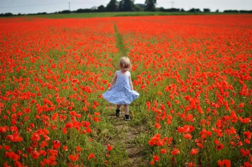 Poppy Field by Harley Tedds